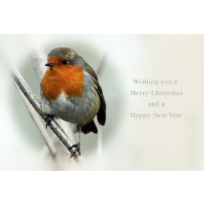 Christmas Card - Robin Redbreast